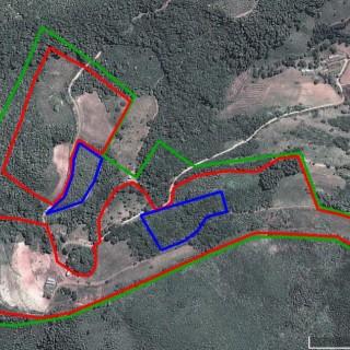 Área Rural com plantação de Eucalipto.