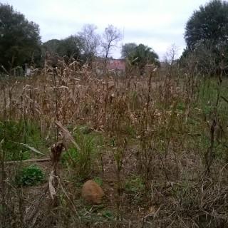 Vende-se excelente terreno no bosque em Marau