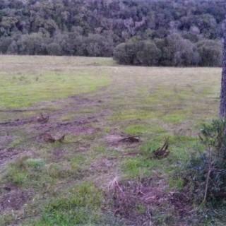 Vende-se fazenda de 56 hectares em Barros Cassal