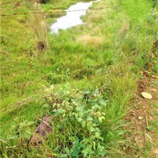 Vende-se excelente área de 7 hectares para sitio em Marau