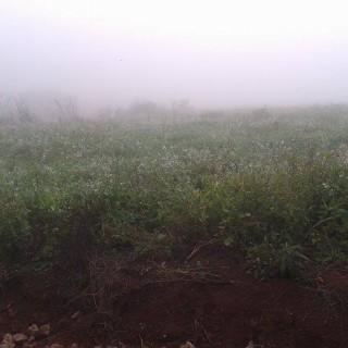 Vende-se terreno no centro em Gentil