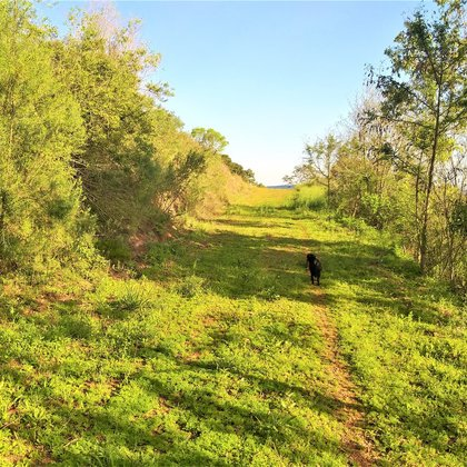 Vende-se terrenos para sítios próximo ao centro de Marau
