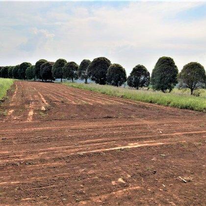 Vende-se lindos terrenos próximo ao centro de Marau