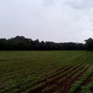 Vende-se área de terra próximo a cidade em Marau