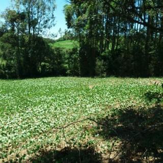 Vende-se área para sítio interior lugar de sossego e natureza em Marau
