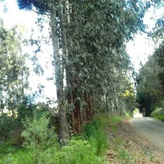 Vende-se excelente área de terra com reflorestamento ativo