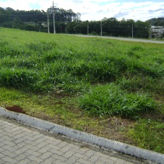 Terreno na Reserva do Parque